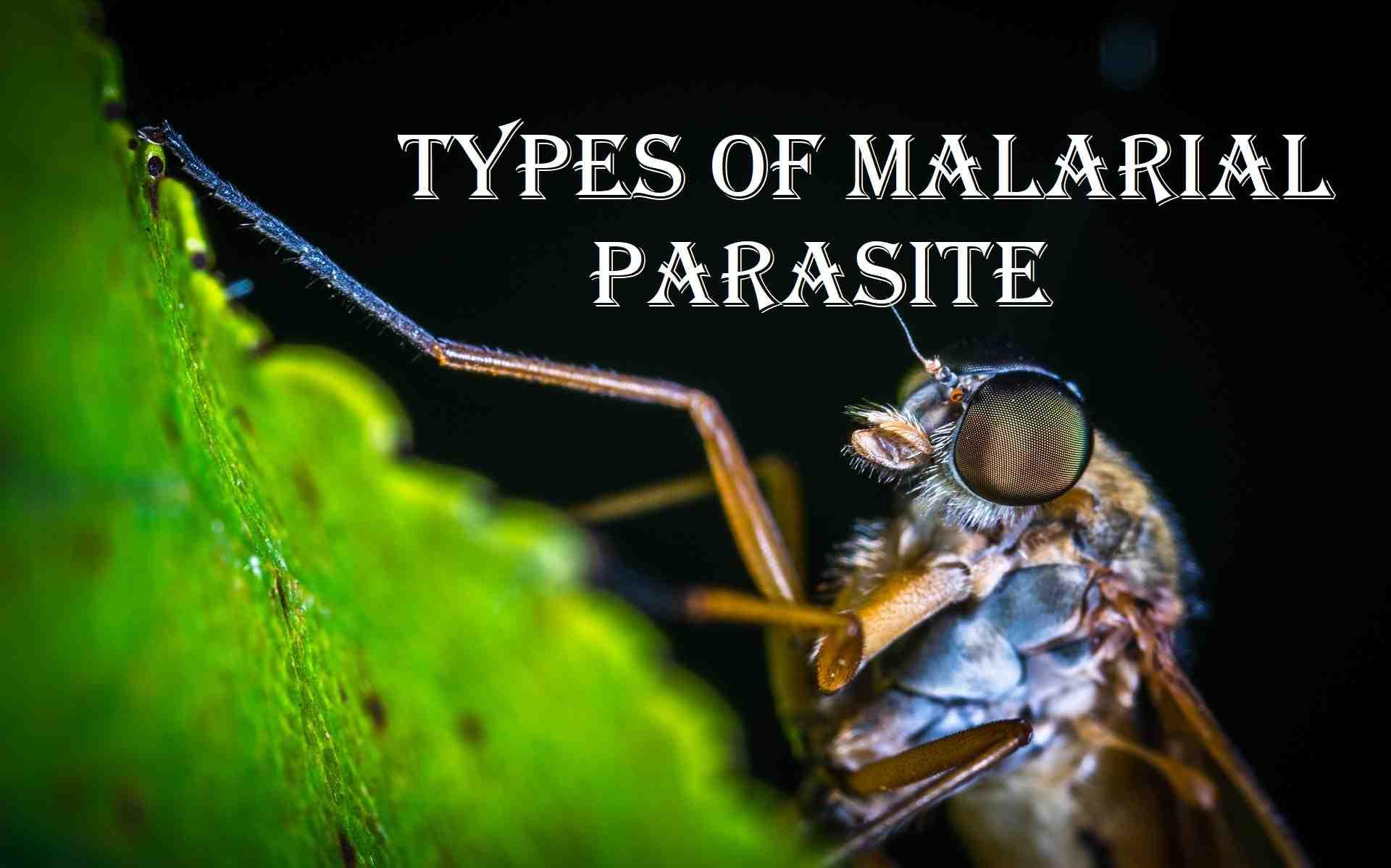 types of malaria